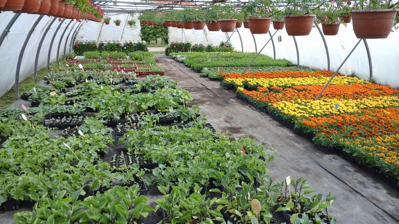 Plants de légumes et à massifs