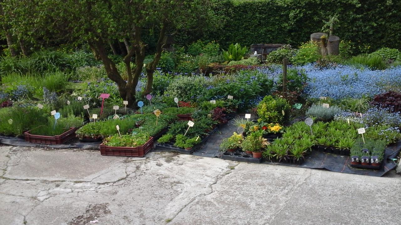 Plantes vivaces et aromatiques